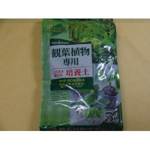 画像1: 観葉植物専用培養土(5ℓ)