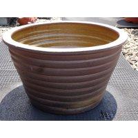 睡蓮鉢(10)