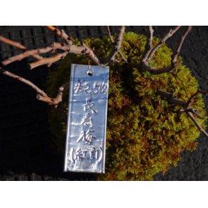 画像4: 吊り式 消えないラベル(大) 5枚入